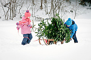 Brother, Sister, Christmas Tree, Sled, Pulling,