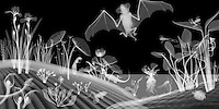 X-ray image of a pond scene (white on black) by Jim Wehtje, specialist in x-ray art and design images.