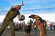 Israel, Tel Nof IAF Base, An Israeli Air force (IAF) exhibition Attack dog demonstration