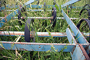 inactive spring tooth harrow