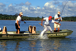 Stock photo of men tarpon (Megalops atlanticus) fishing in Parismina, Costa Rica