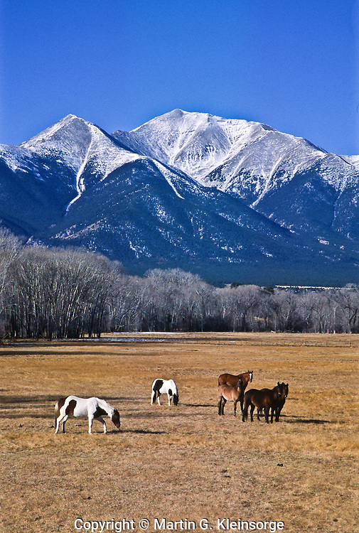 Horses grazing in the Upper Arkansas Valley below 14,197 ft. Mount Princeton.  Near Buena Vista, Colorado.