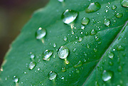 water droplets on a leaf in spring
