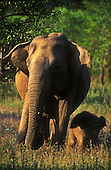 Sri Lankan Wildlife and Nature