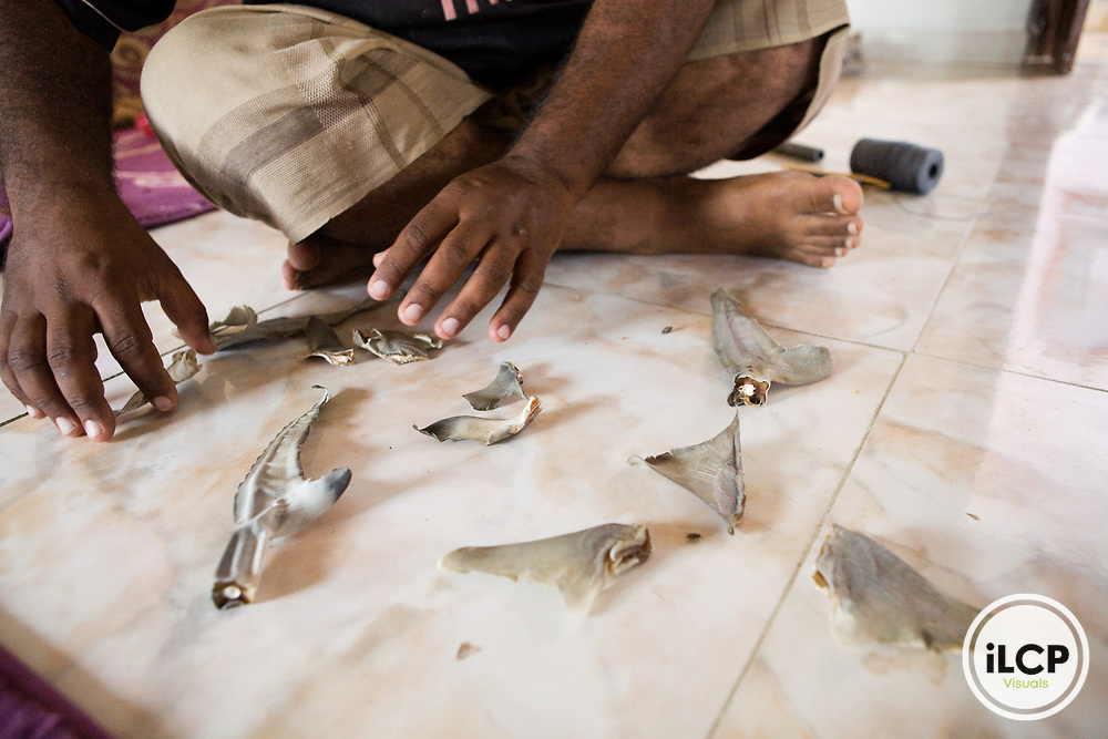 Fisherman with shark fins for the export to China, Hawf Protected Area, Yemen
