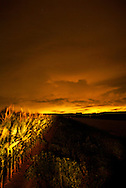 "crops at night ""painted"" with light"