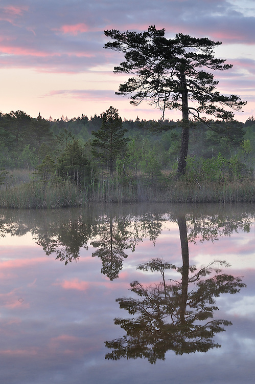 H2S ponds, Bog forest, Kemeri National Park, Latvia