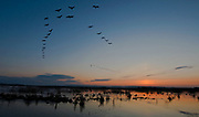 Sunrize over Lake Hornborga, Sweden, while Common Cranes are moving to their daily feeding grounds around the western end of the lake.