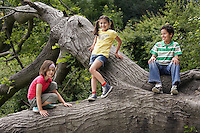Three friends (7-9) on fallen tree