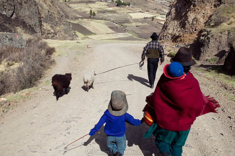 The Ayme family on their way to the weekly market in Simiatug, Ecuador. They are taking two sheep to sell so they can buy rice, potatoes and other vegetables since their own potato  crop is not ready to harvest. (Supporting image from the project Hungry Planet: What the World Eats.)(MODEL RELEASED IMAGE).