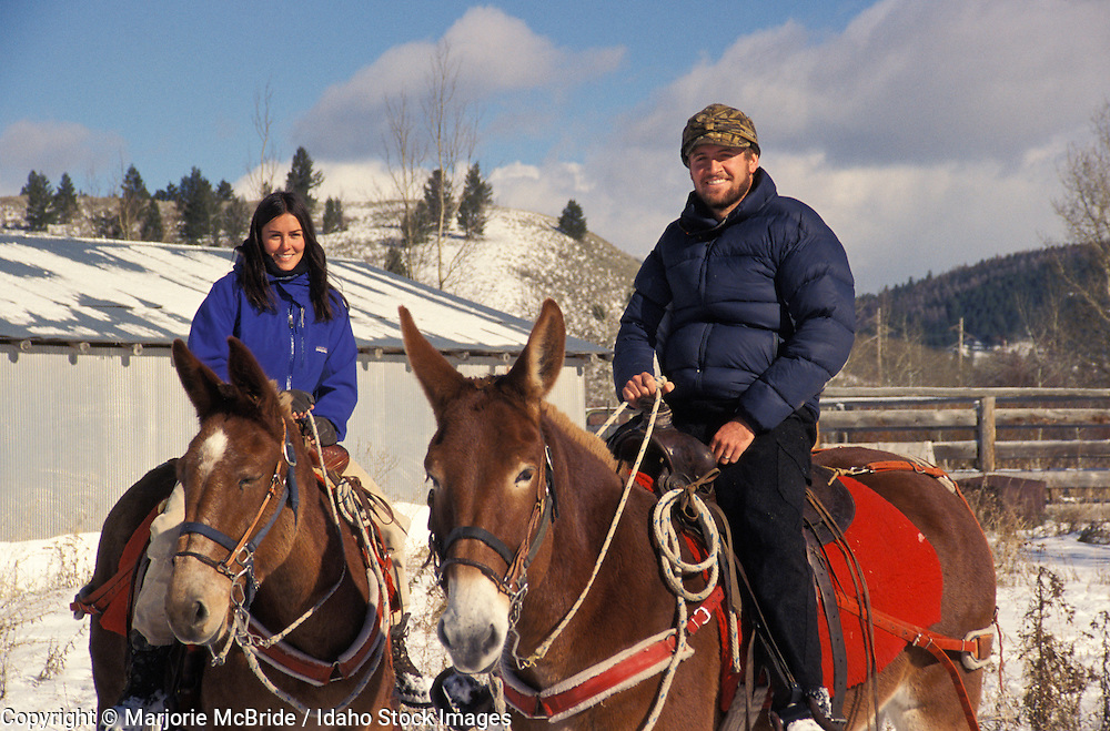 Couple riding mules during winter in Island Park, Idaho.