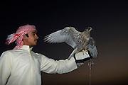United Arab Emirates (UAE) - Abu Dhabi Province. Beduin culture: falconry