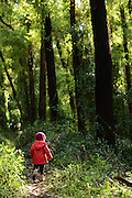 red coat in green forest