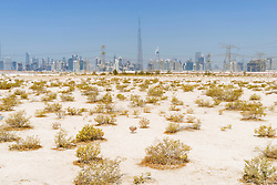 Skyline of skyscrapers and Burj Khalifa from the desert in Dubai United Arab Emirates