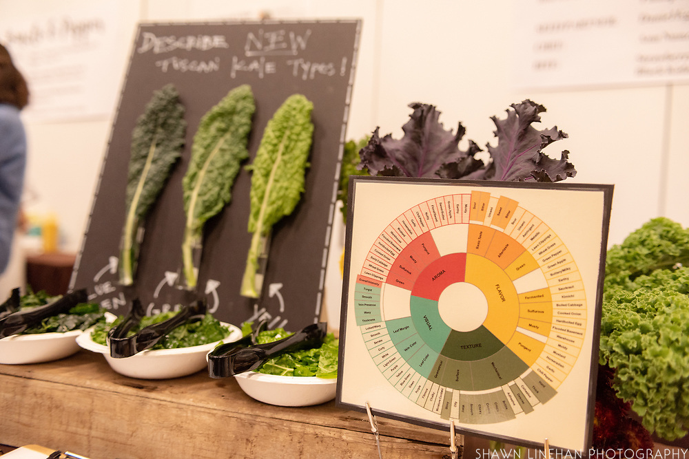 BRASSICAS, Brassica spp.<br /> Showcase: Experimental Breeding lines<br /> Breeders: Phillip Griffiths and Hannah Swegarden, Cornell University<br /> Chef: Ann Nunziata, Natural Gourmet Institute