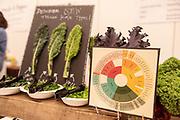 BRASSICAS, Brassica spp.<br /> Showcase: Experimental Breeding lines<br /> Breeders: Phillip Griffiths and Hannah Swegarden, Cornell University<br /> Chef: Ann Nunziata, Natural Gourmet Institute