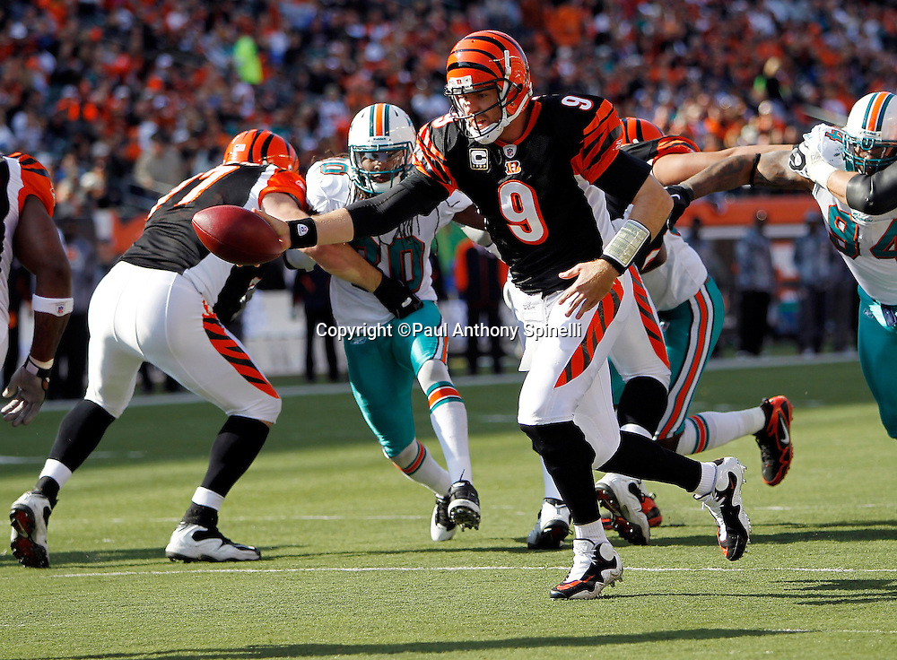 Cincinnati Bengals quarterback Carson Palmer (9) hands off the ball on a running play during the NFL week 8 football game against the Miami Dolphins on Sunday, October 31, 2010 in Cincinnati, Ohio. The Dolphins won the game 22-14. (©Paul Anthony Spinelli)