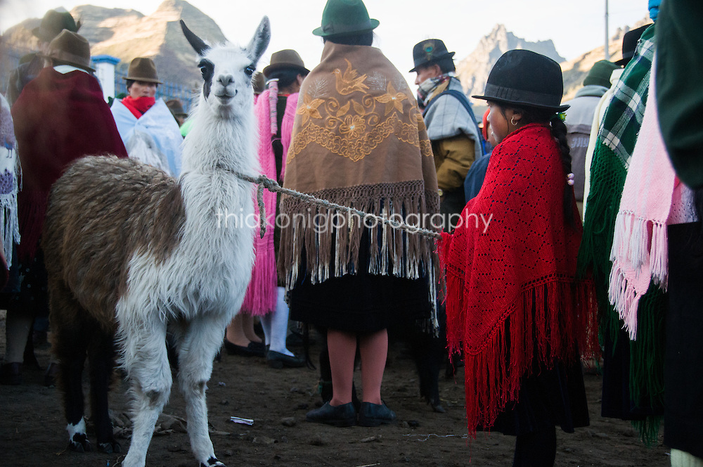 Little girl takes llama to morning market, Quilotoa Loop high in the Andes, Ecuador.