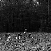 "Clearing a field of stones, soon began a pun of ""Farming Rocks"" .Crop mob at Eatable Earthscapes. PITTSBORO, NC - MARCH 15: Photo by LOGAN MOCK-BUNTING"