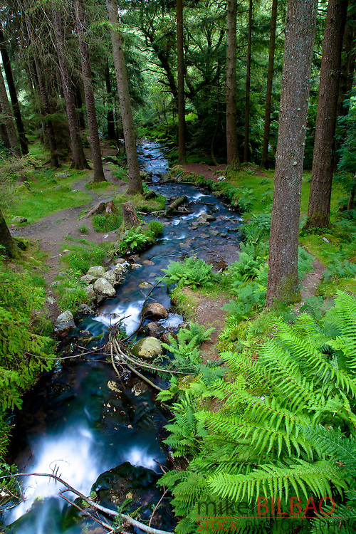 Forest and river near Poulanass waterfall. Wicklow Mountains National Park. County Wicklow.  Ireland