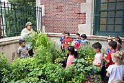 Brooklyn, NY - June 25, 2019: Students at PS 295 in Greenwood Heights learn about food and gardening in the container garden supported by Slow Food NYC's Urban Harvest program.<br /> <br /> Photo by Clay Williams.<br /> <br /> © Clay Williams / http://claywilliamsphoto.com