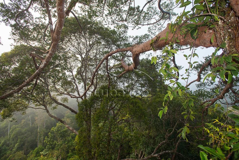 Canopy of the forest, Maliau Basin, Sabah, Malaysia, Borneo,
