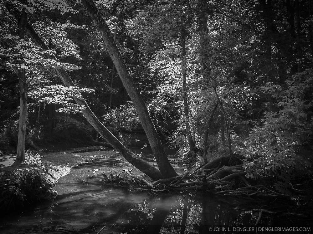 Sunlight filters through the trees along a creek in Rock Bridge Memorial State Park just outside of Columbia, Mo.