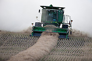 Photo Randy Vanderveen.Clarkson Valley, Alberta.02/10/09.A combine stirs up a dust storm behind it as the operator picks up a canola swath Oct. 1 on a farm in the Clarkson Valley area between Crooked Creek and Sturgeon Lake. The weather was co-operative for harvest in September, however, October's arrival also seems to have brought a change in weather with it.