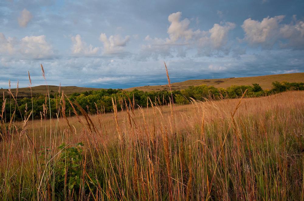 Indian Grass at  Konza Prairie, Flint Hills, Kansas