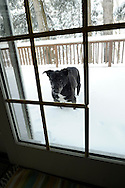 Cody, our sweet black lab, loved the deep snow this winter of 2011.  He left us on April 19, at age 13 1/2..We miss him.