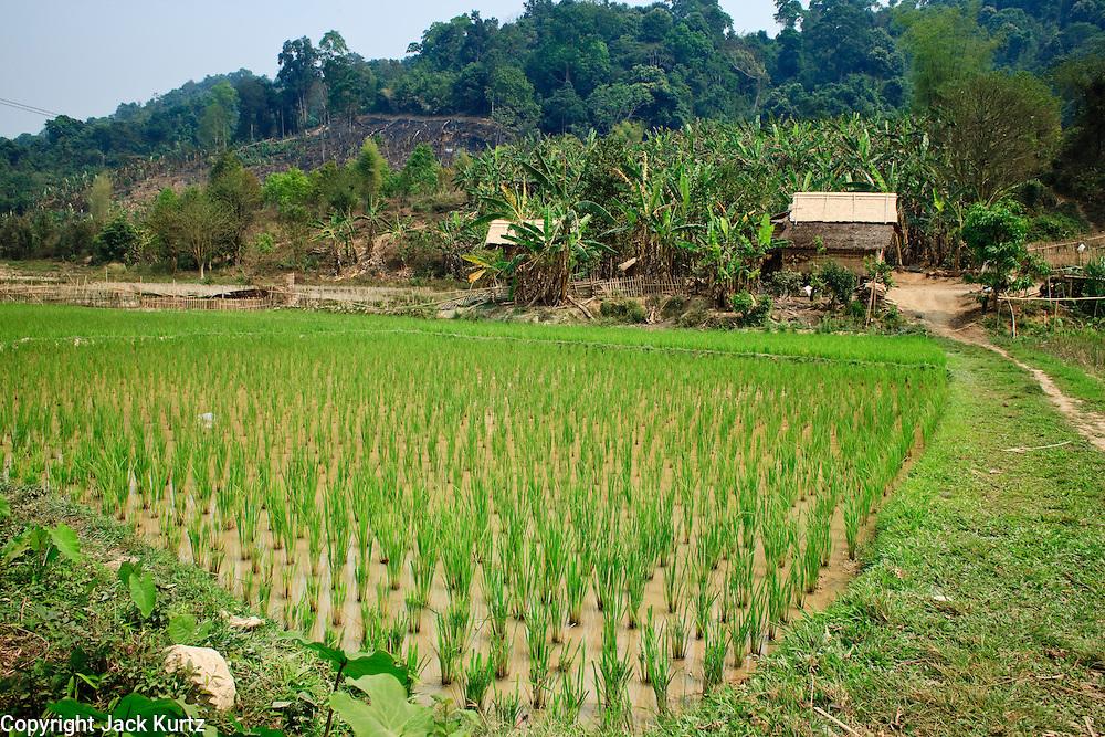 16 MARCH 2009 -- LUANG PRABANG, LAOS: Rice fields south of Luang Prabang, Laos.  Photo by Jack Kurtz