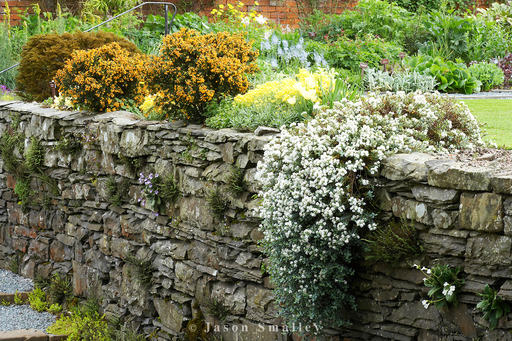 Holehird garden, Windermere Dry stone wall in a garden with a good range of rockery plants flowering