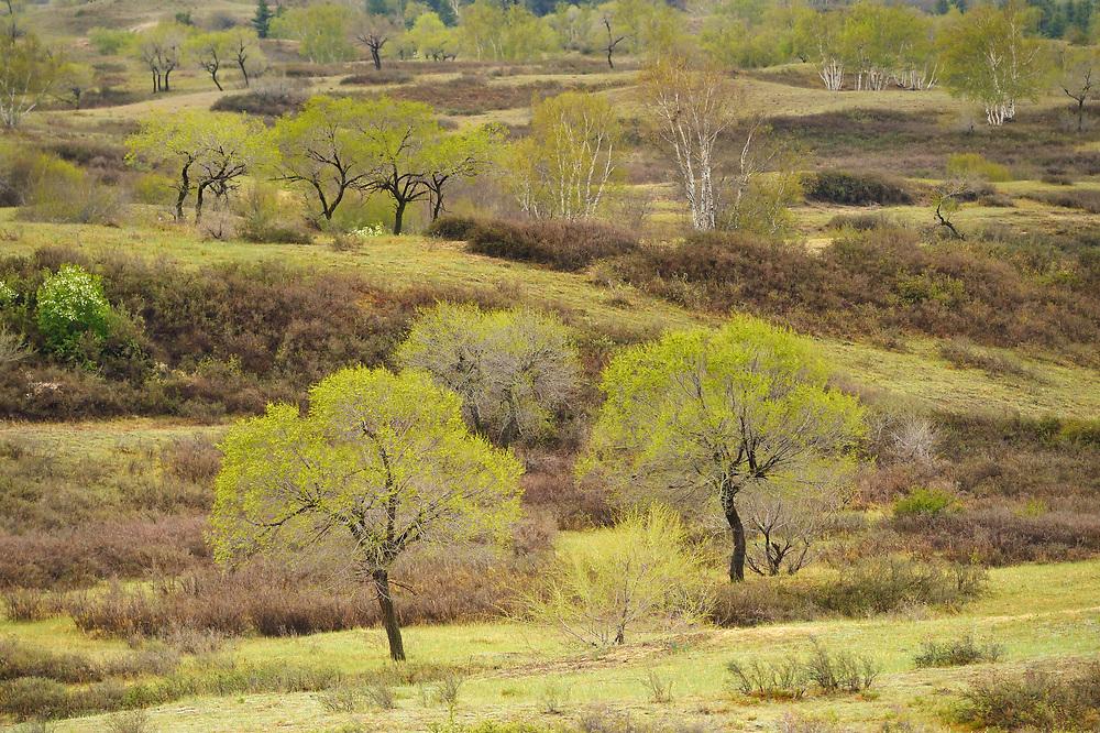 Bai Yin Aobao National Nature Reserve, Inner Mongolia, China