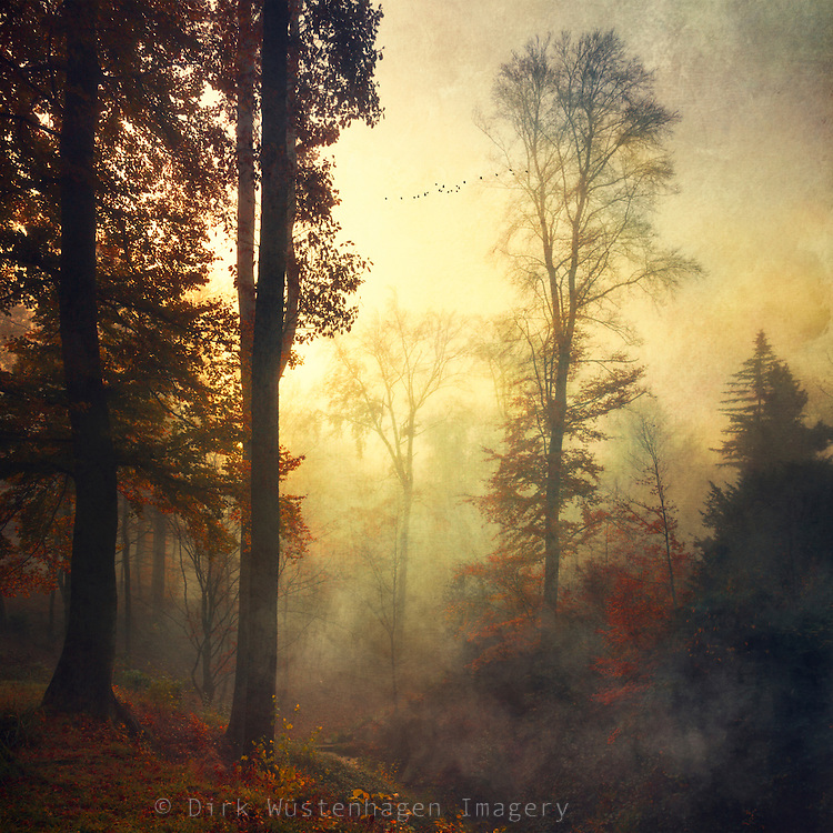 Fog and rain in a park on a November morning - textured photograph