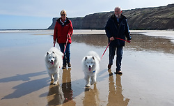 © Licensed to London News Pictures. <br /> 17/04/2015. <br /> <br /> Saltburn, United Kingdom<br /> <br /> Mary and Alan Dunning walk their Samoyed dogs, Gordo (L) and Jefe, on the beach at Saltburn in Cleveland.<br /> <br /> Photo credit : Ian Forsyth/LNP