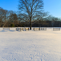 A lone tree in winter in a field at the Julia Bird Reservation in Ipswich, Massachusetts.