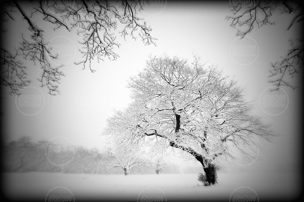 Holga style landscape image of snow in Ashton Court Estate near Bristol