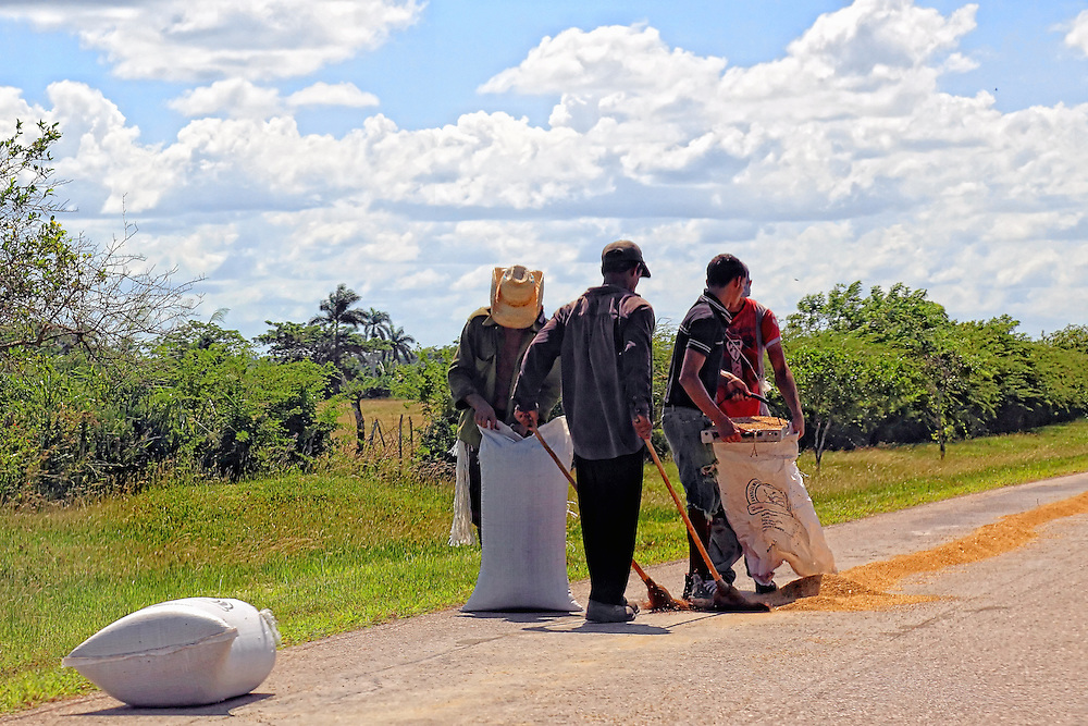 Drying rice on the road near Vertientes, Camaguey, Cuba.