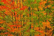 Autumn  colors at Lac Wapizagonke. Great Lakes - St.  Lawrence Forest Region.<br />La Mauricie National Park<br />Quebec<br />Canada