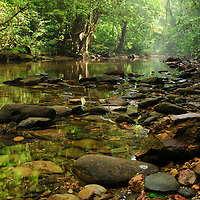A stream through lowland rainforest in Mulu National Park, Sarawak.