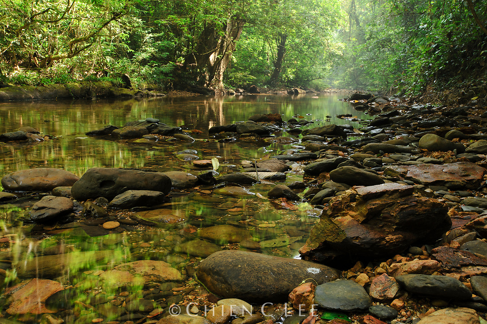 A stream through lowland rainforest in Mulu National Park, Sarawak.