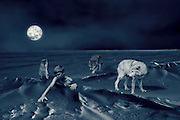 photoart: compilation of images created using photoshop and inspired by the pink floyd song - the thin ice