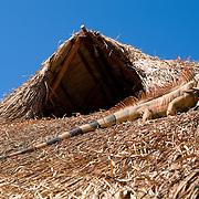 Iguana over palapa roof. Cozumel, Mexico.
