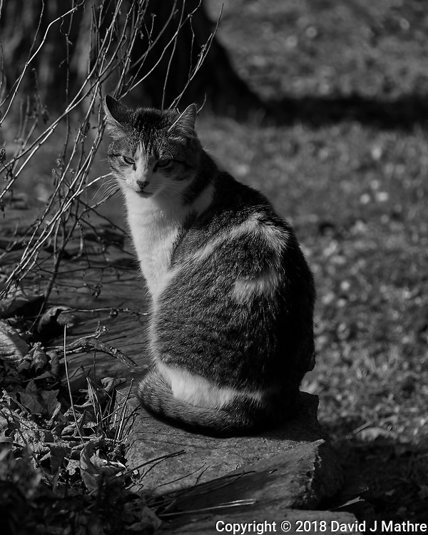 Cat. Winter Backyard Nature in New Jersey. Image taken with a Leica TL-2 camera and 55-135 mm lens (ISO 100, 135 mm, f/4.5, 1/500 sec).