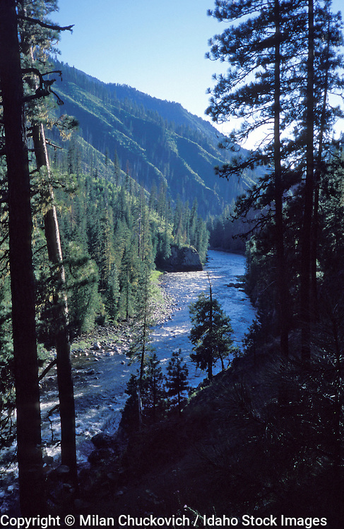 THIS PHOTO IS AVAILABLE FOR WEB DOWNLOAD ONLY. PLEASE CONTACT US FOR A LARGER PHOTO. Selway River Idaho, Frank Church Wilderness, ravine, drainage, canyon trees
