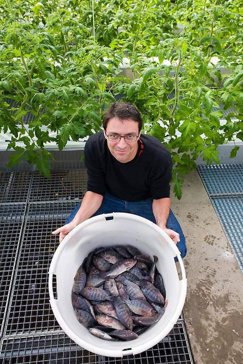 Germany - Deutschland - Berliner Leibniz-Institut für Gewässerökologie und Binnenfischerei (IGB); ASTAF-PRO; Aquaponic-System for Emission Free Tomato & Fish Production in Green Houses; Versuchsprojekt ; Biologen haben ein in sich geschlossene Anlage entwickelt, in der die Fischzucht mithilfe eines Wasserkreislaufs mit dem Gemüseanbau in einem neuen Gewächshaus des IGB am Müggelsee kombiniert ist. Tilapia > Afrikanischer Buntbarsch, Speisefisch; HIER: Dr. CHRISTOPH van BALLEGOOY; Wissenschaftler, Biologe, Berlin 02.04.2009