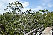 John Pennekamp Coral Reef State Park. ..Florida 2009..Foto © Stefan Falke..