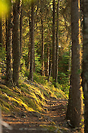 Hiking trail at Isle Royale National Park.
