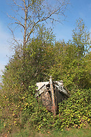 Hornby Island<br /> Wrecked wooden boat overgrown in bushes and trees   Photo: Peter Llewellyn
