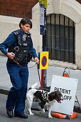 © London News Pictures. 02/05/2015. Police with sniffer dog outside the hospital before Catherine Duchess of Cambridge and Prince William leave the Lindo Wing of St Mary's hospital in London holding their new born baby daughter, Princess of Cambridge. Photo credit: Ben Cawthra /LNP
